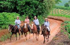 Cavalgada de Guaxupé (MG) reúne 120 cavaleiros