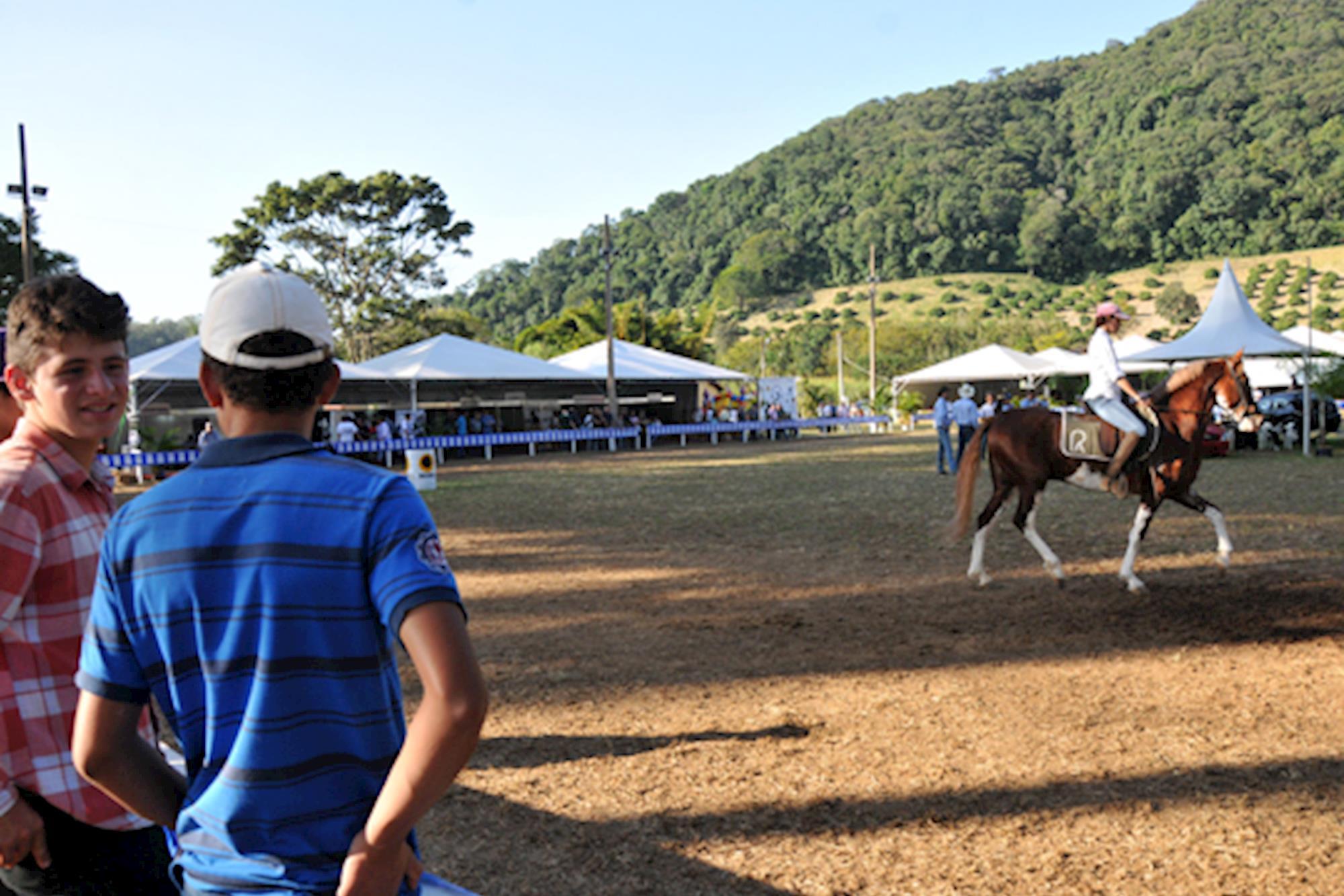 Copa de Andamento Mangalarga - Jundiaí/SP