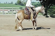 Dançando com o meu cavalo