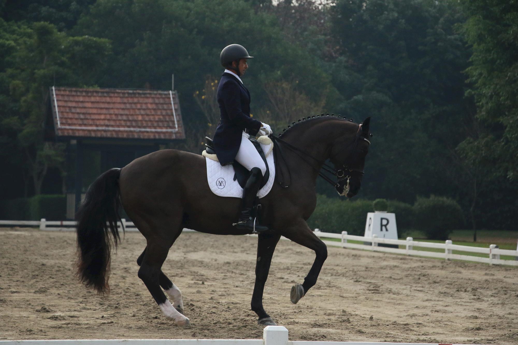 adestramento weg 2018, weg 2018, Jogos Equestres, Erika Costa