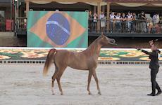 37ª Exposição Nacional do Cavalo Árabe