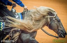 FEI destaca participação do cavalo crioulo em Rédeas no WEG
