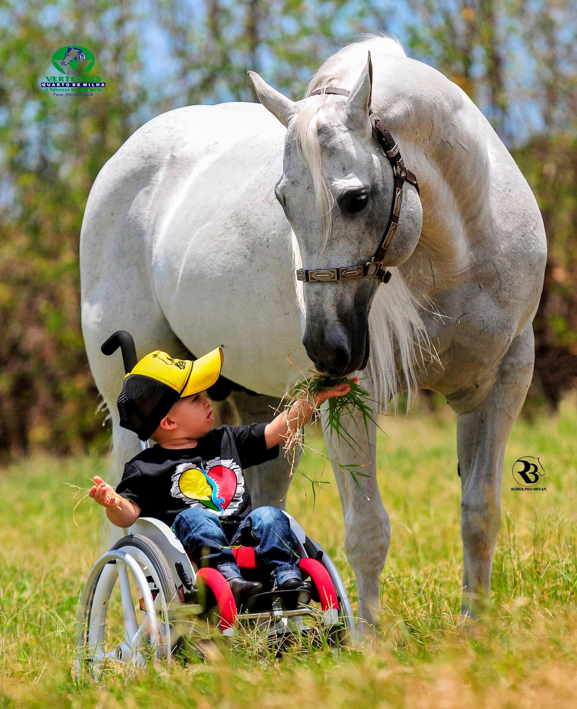 Revista Horse, garanhão, Menino, Quarto de Milha, fotos artísticas de cavalo,