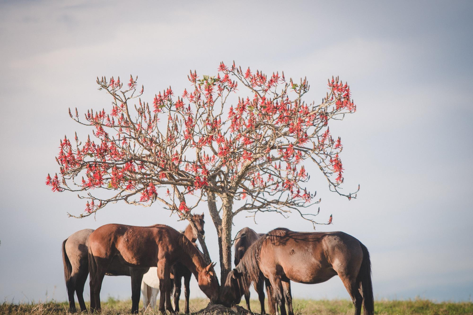 fotos inteligência biológica, edição 114, edições, cavalos pastando,