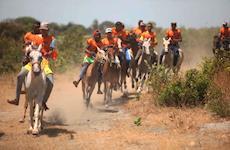 Festival destaca o cavalo Marajoara