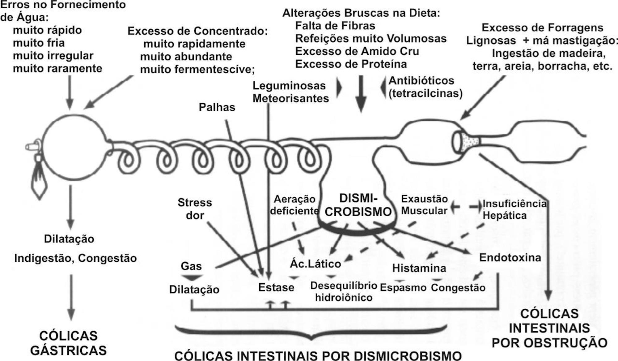 veterinária, cólica, sistema digestivo, equinos, Reprodução