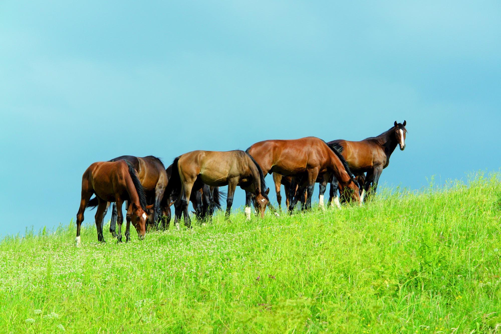 veterinária, cavalos, pasto, equinos, doenças,