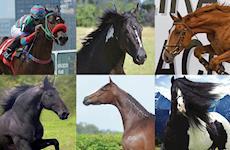 Os cavalos criados no Brasil