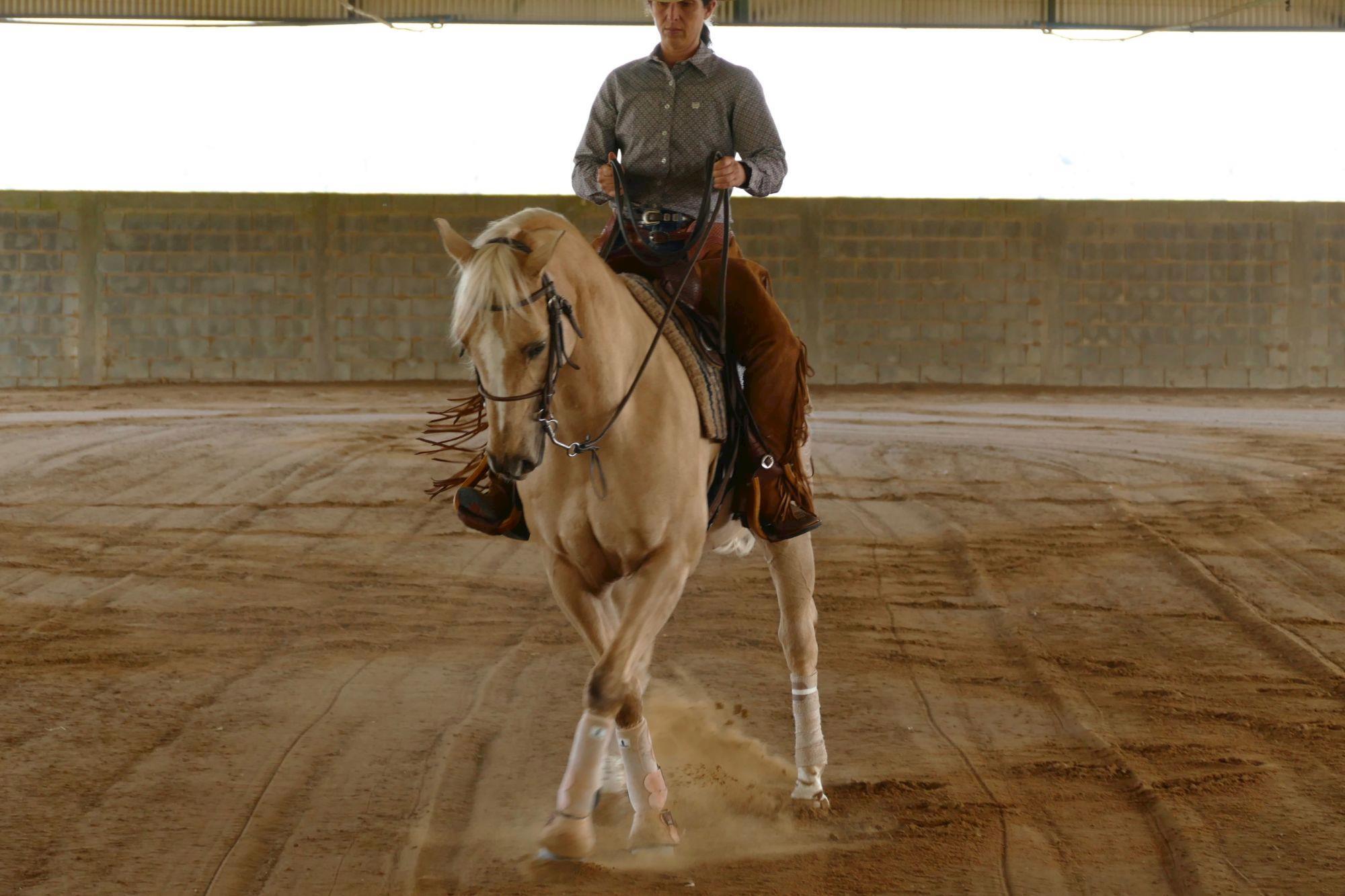 FOTO 1 - Apoio, Apoio cavalos,  treinamento,  cavalos,  Revista Horse, Eduardo Borba, Exercícios da escola acadêmica - Parte 4