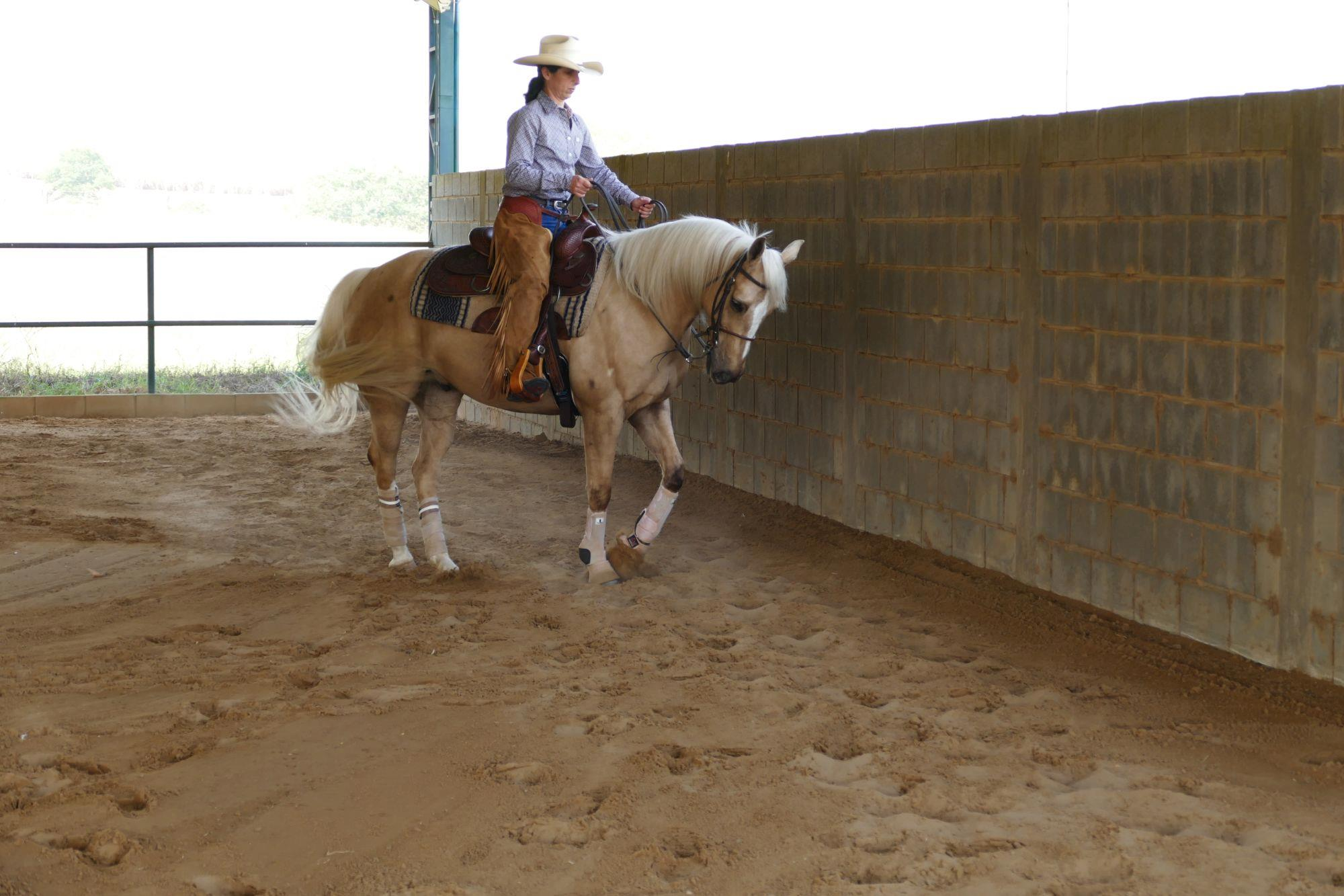 FOTO 4 - Travers, Apoio cavalos,  treinamento,  cavalos,  Revista Horse, Eduardo Borba, Exercícios da escola acadêmica - Parte 4