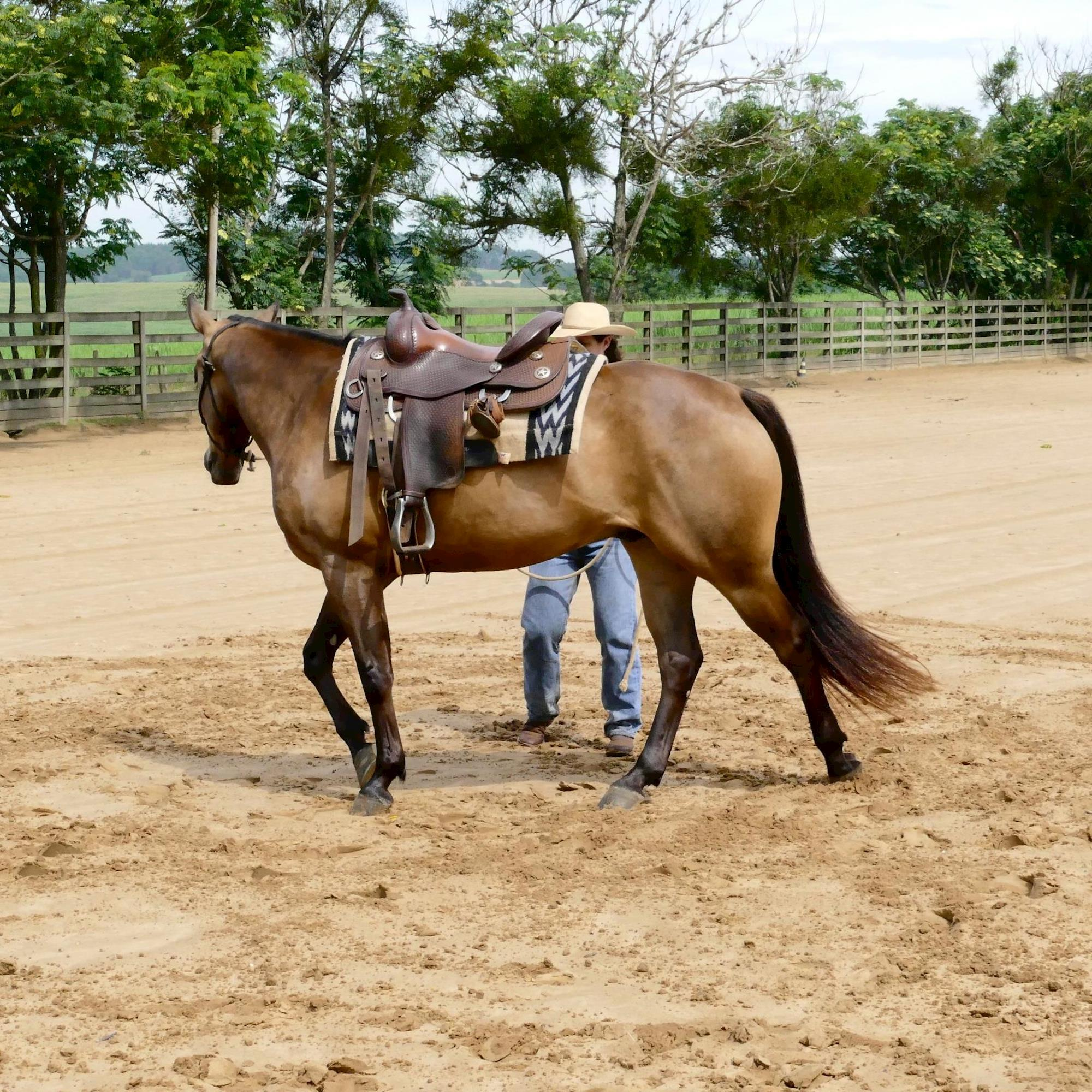 treinamento - dudi, horse 95, rédeas, Eduardo Borba