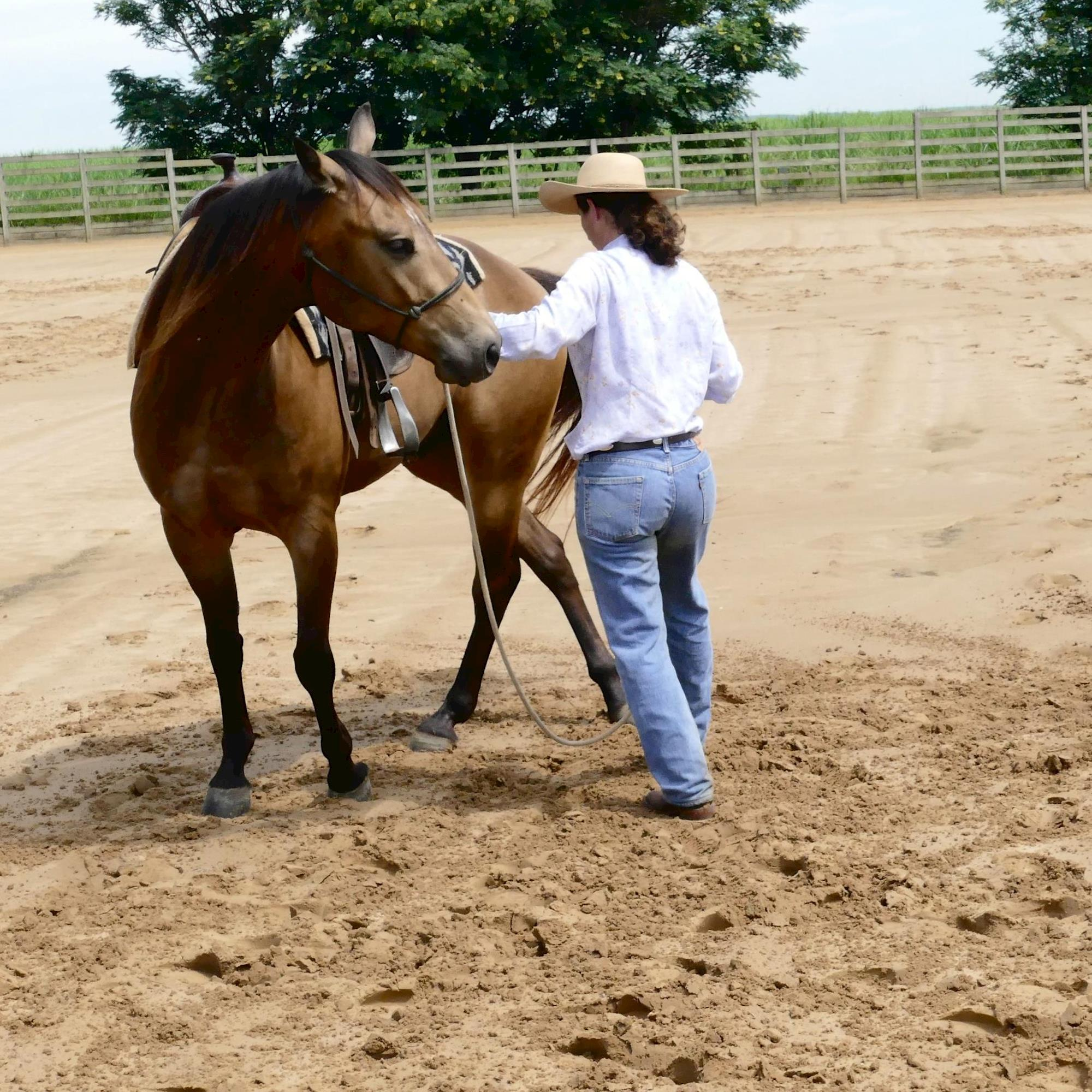 treinamento - Dudi Ometto, horse 95, Horse, Rédeas, Eduardo Borba
