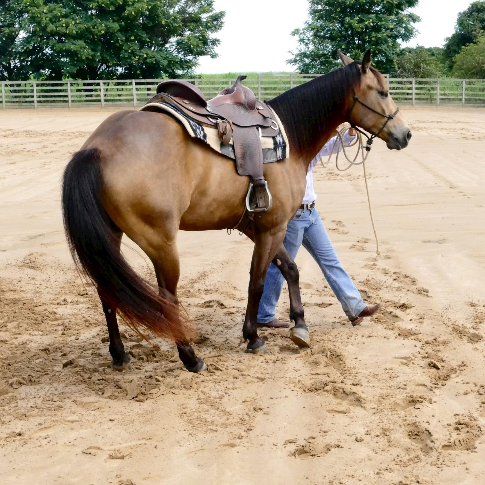 treinamento - Dudi Ometto, horse 95, Rédeas, Doma, Eduardo Borba