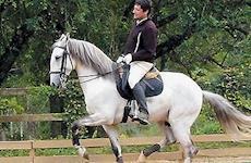 Na Equitação, os fins não justificam os meios
