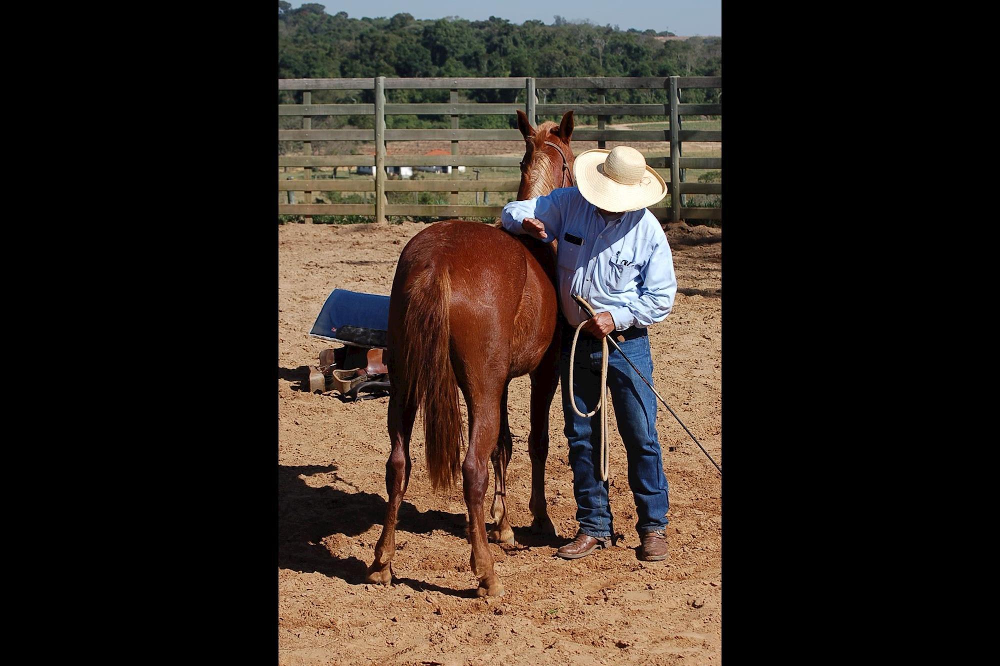 O velho e bom horsemanship