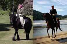 A longevidade na equitação