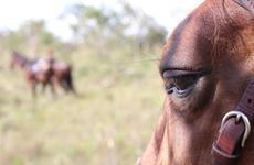 A qualidade de vida dos cavalos
