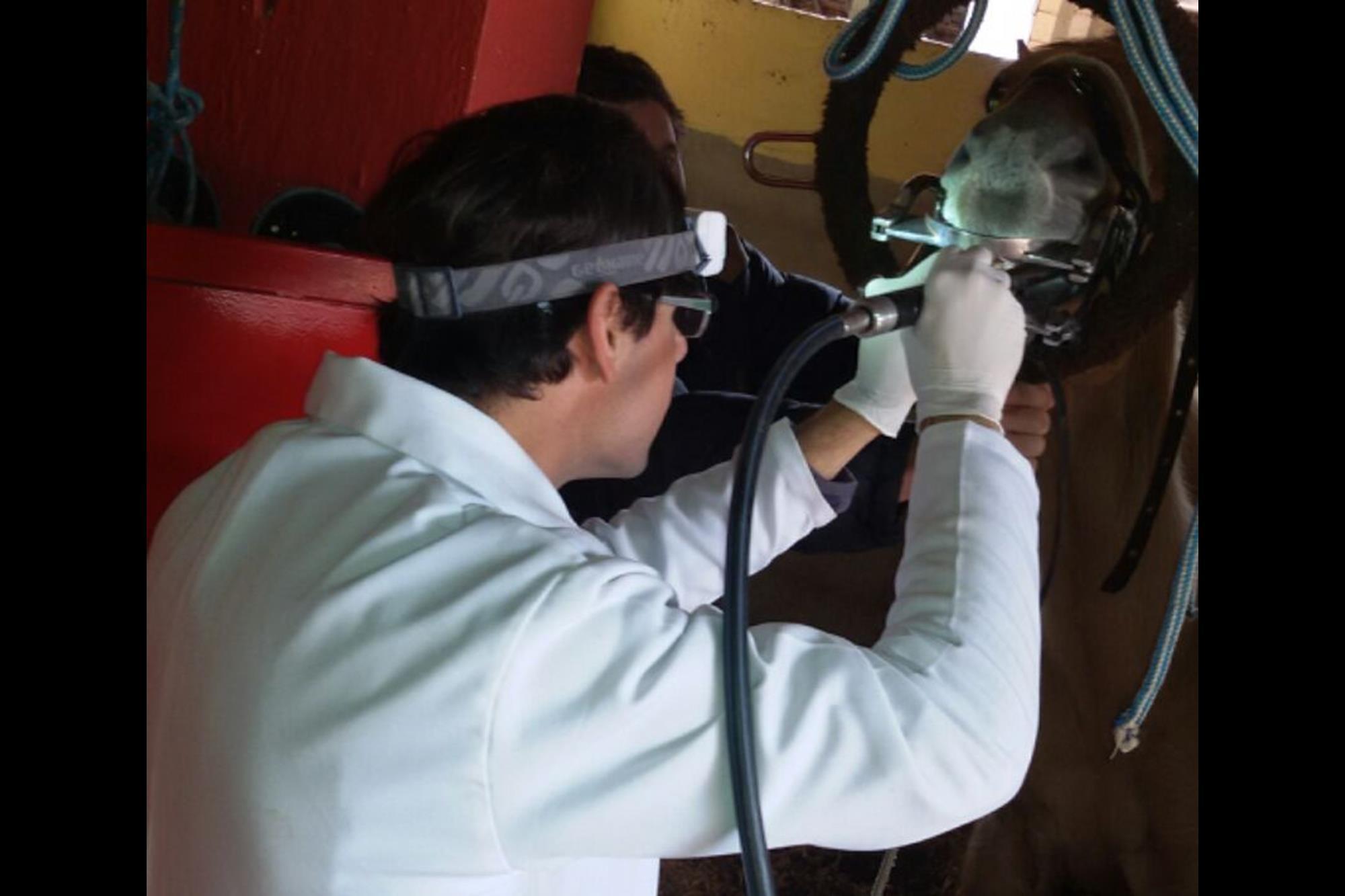 Como a dentição afeta nas performances dos cavalos atletas