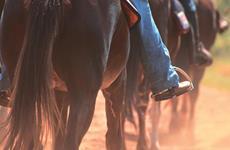 Vamos usar as rédeas, pernas, assento, postura e a voz para nos comunicarmos com os cavalos, doma