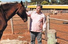 O bem-estar da pecuária aos cavalos
