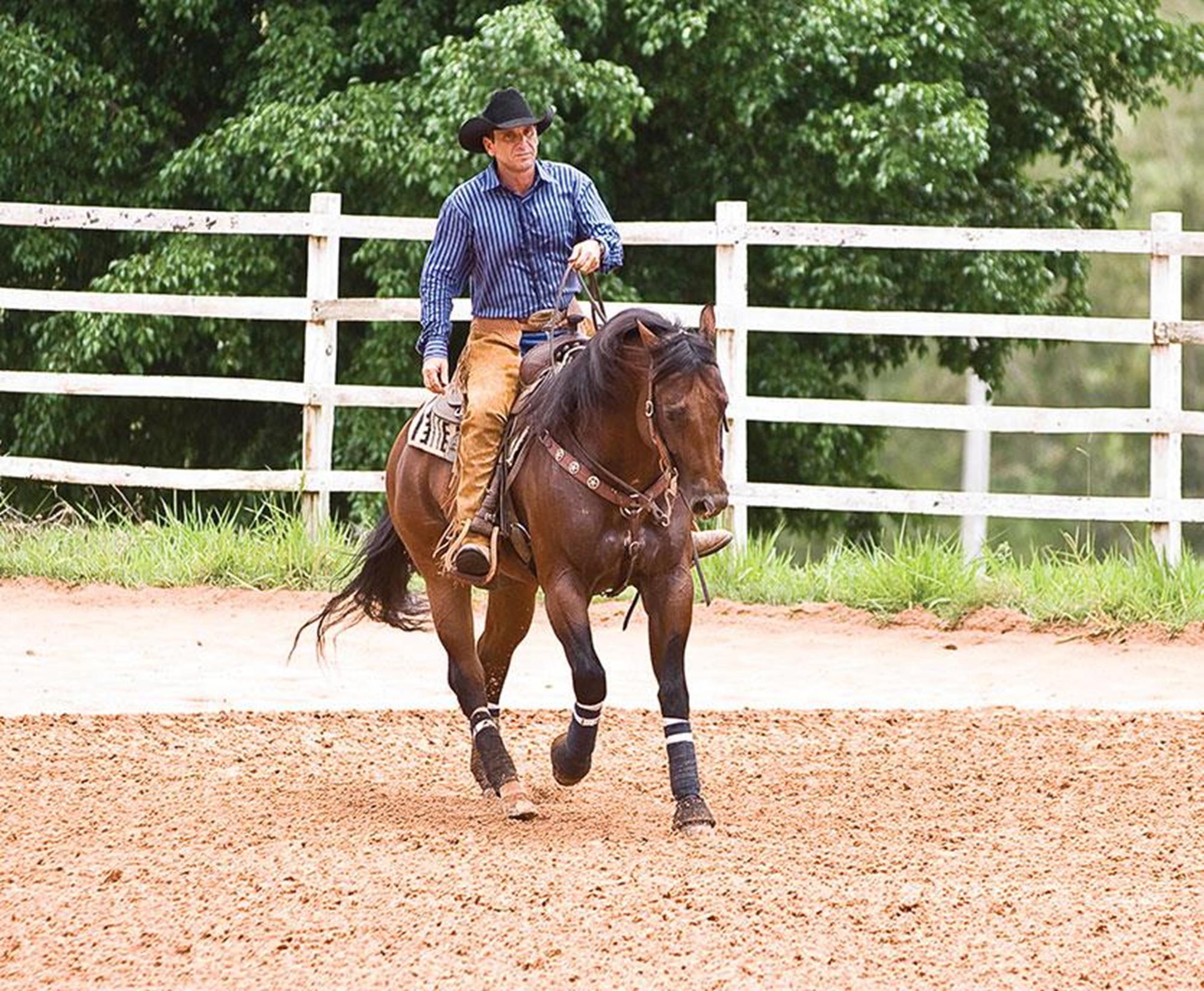 horse 68,