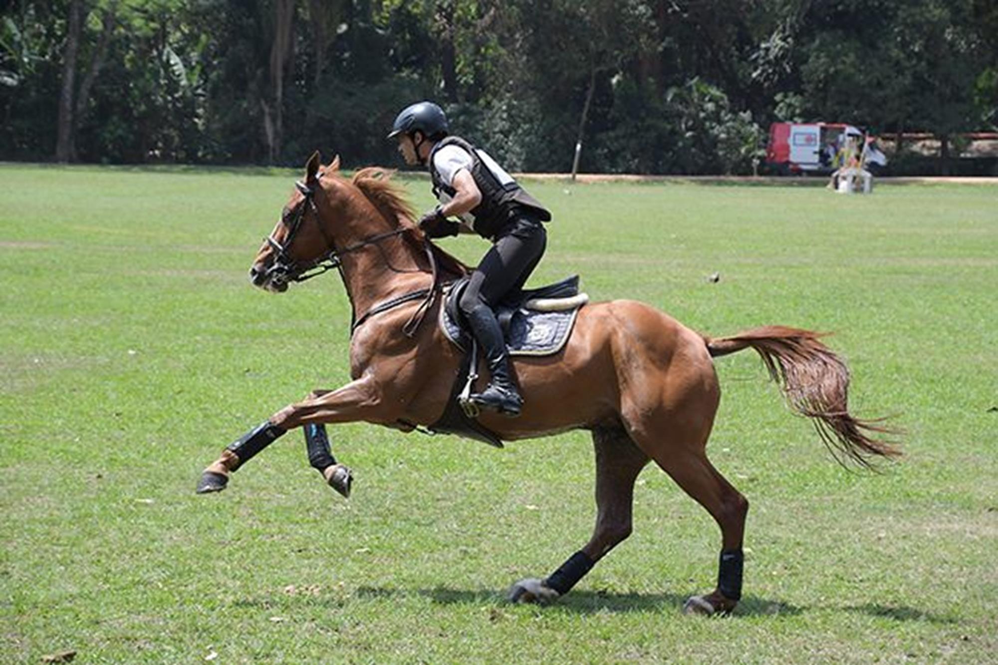O estreante e cavaleiro santamarense de Salto Pedro Henrique Maia de Oliveira com El Guapo,  cedido por Léo Fernandes,  foi 5º na classificação geral, Duílio Andrade/Assessoria, O OURO DA CASA