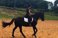 Molduras da Equitação