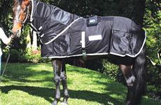A fisioterapia em cavalos