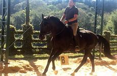 """A """"ligeireza"""" na equitação"""