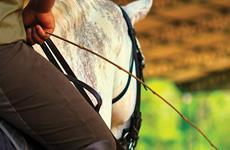Cavalos não usam relógios
