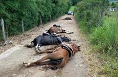 O caso dos cavalos eletrocutados
