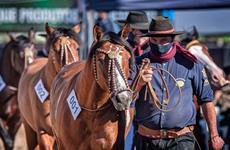 Passaporte Outonal reabre ciclo do Cavalo Crioulo em Esteio (RS)