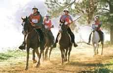 Como evitar doenças nos cascos dos cavalos
