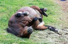 Nós matamos Cavalos? Infelizmente, sim!