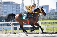 J. Ricardo busca nova vitória em árabes no Jockey Club São Paulo