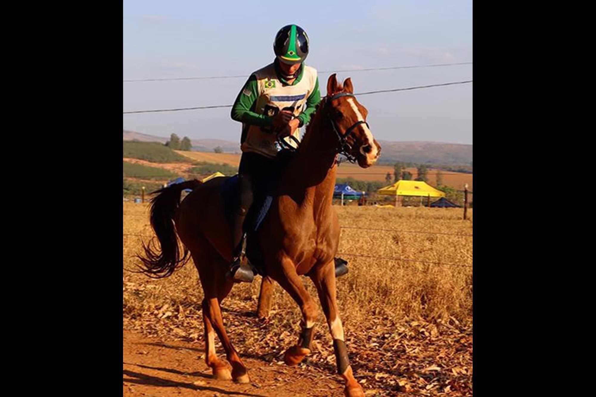 Cabo Frio CSM (*Eksport x Ahuar) é um macho castrado,  PSA nascido em 2005,  propriedade de José Carlos Vaz Guimarães, Enduro,  cavalo Árabe,  campeonato brasileiro,  CBH,  Rodrigo Barreto, Divulgação, Rodrigo Barreto é o campeão brasileiro